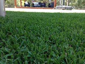 Buffalo Turf - supplied, laid, watered, rolled - $8.90 p/m Mango Hill Pine Rivers Area Preview