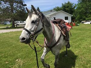 Price reduced Reg AQHA video included