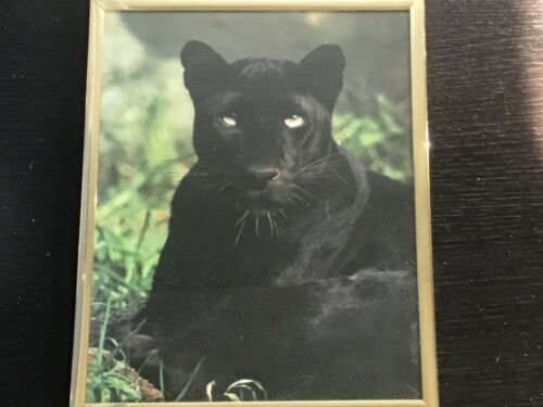 Black Panther 10x8 inch Framed Picture