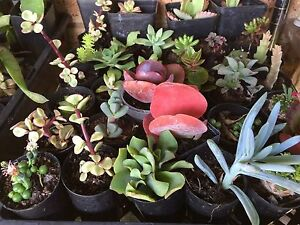 Selling a large variety of plants TODAY from 9am to 12pm. Bull Creek Melville Area Preview
