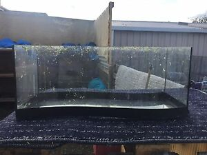 Curved fish tank. Hobart CBD Hobart City Preview