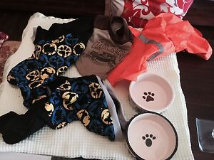 Puppy pack  Moving Sale Maitland Maitland Area Preview