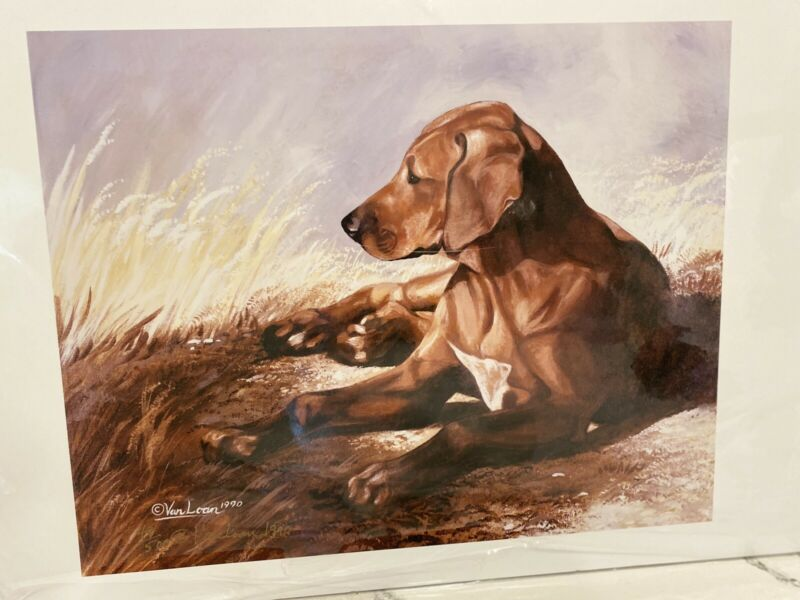 Rhodesian Ridgeback Lying Ltd Ed 11x14 Print