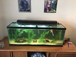 45g tank and stand.
