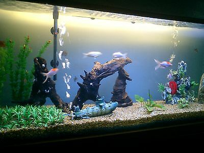 How to set up a fish tank ebay for Fish pond setup