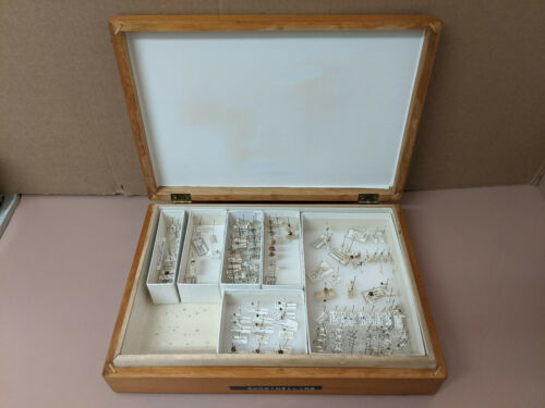 Vintage Wooden Insect Collection Display Box + Coccinellids Ladybug Collection
