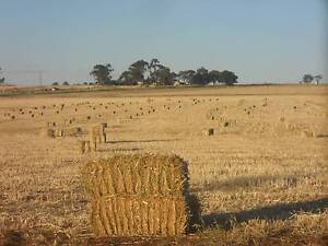 Oaten Hay -square bales Freeling Gawler Area Preview