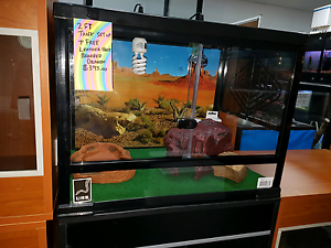 Tank and bearded dragon Smithfield Plains Playford Area Preview