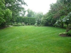 Spring Cleaning/Yard Services Available