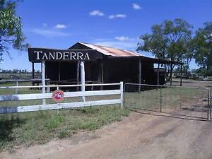 125 Acre Horse / Farming Property with the lot - Glenmorgan Qld Glenmorgan Dalby Area Preview
