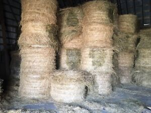 Hay for sale 4x5 round bales