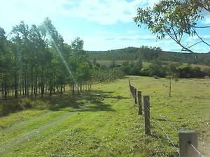 1430 Acres / 6 Titles / Grazing / Plantations / NSW Bottle Creek Kyogle Area Preview
