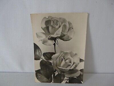 Karte Schwarz Und Weiß (DDR Postkarte schwarz-weiß Echt Foto Bild und Heimat (Stöhr) )