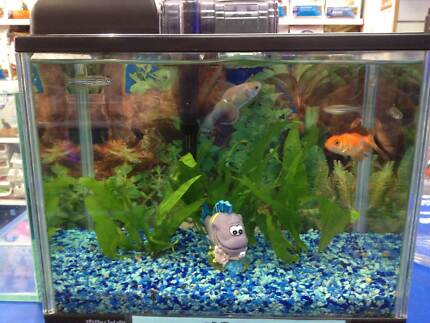 FISH TANK SET UP-14L BRAND NEW! Bentleigh Glen Eira Area Preview