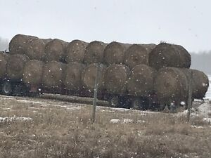 Hay and straw bales for sale