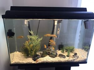 Fishtank complete set with 9 cichlids.