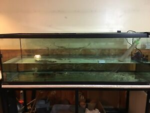 180 gallon fish