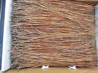 """1 lb Georgia Long Pine Needles Average Length 10""""-14"""" Basket Weaving/Crafts"""