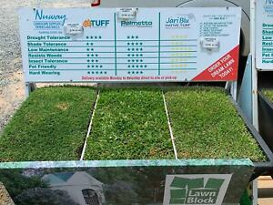 Turf (Grass, Lawn) Varieties