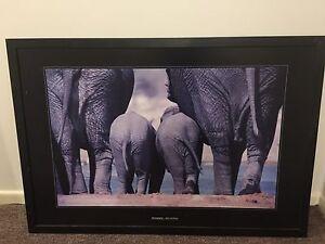 Elephant picture Alexandra Hills Redland Area Preview