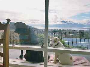 Professional couple with 2 outside dogs looking for new home Hobart CBD Hobart City Preview