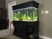 90 gallon aquarium all set up with stand and