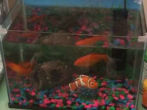5  Fish For Sale Get Now! Leeming Melville Area Preview