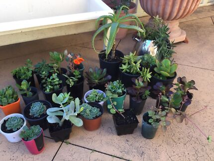 Plants from $2.50