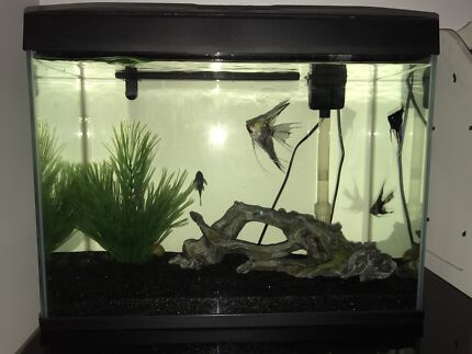 Blue Planet 50L fish tank - including fish, food and accessories