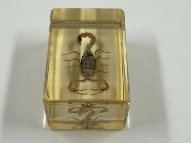 VINTAGE GOLDEN SCORPIO IN GLASS / EPOXY RESIN / SOUVENIR / COLLECTION