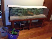 Aquarium set up 6ft tank Oakleigh Monash Area Preview