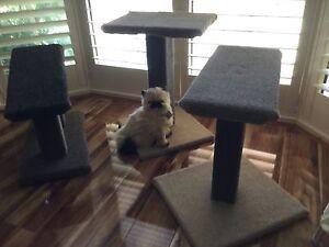 Cat Scratcher Posts Amaroo Gungahlin Area Preview