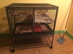 Rats and beautiful big cage.(REDUCED $75)