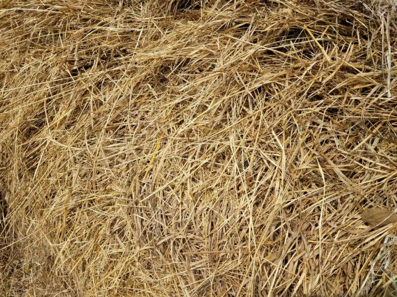Box of Real Organic Prairie Hay great for Animal Reptile Pet Bedding