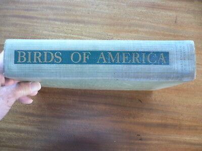 Birds of America T Gilbert Pearson 1936 Garden City Publishing - Party City Gilbert