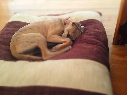 Free house & dog sitting - Yarra area