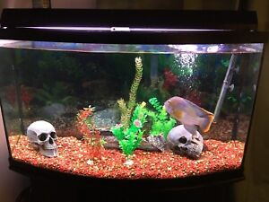 55 gallon bowfront tank everything you need
