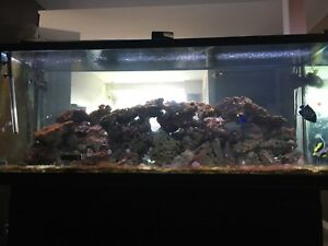 55 & 220 gallon fish tank for sale