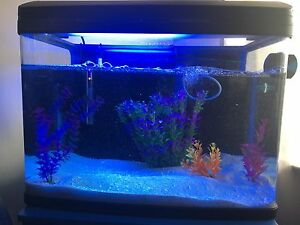 620 AquaStyle 90L Curved Glass Aquarium Marion Marion Area Preview