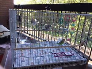 Two budgies with a big cage, toys and food