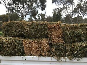 Lucerne hay Hillier Gawler Area Preview