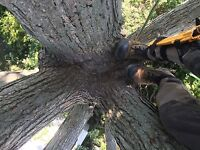 Professional-Economic-Safe-Tree Services