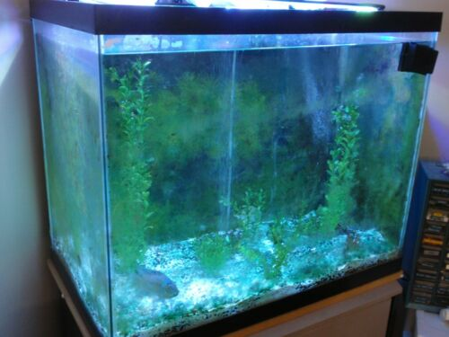 56 GALLON CUBE TANK , STAND , FILTERS , LIGHT +PICK UP ONLY+