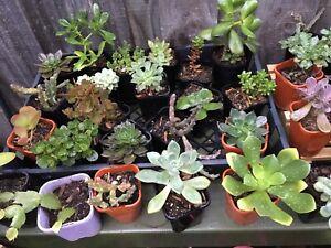 Succulents / plants $3 each