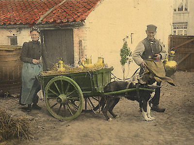 BERNESE MOUNTAIN AND MILK CART VINTAGE IMAGE DOG GREETINGS NOTE CARD