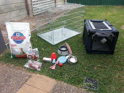 Complete puppy kit Nerang Gold Coast West Preview
