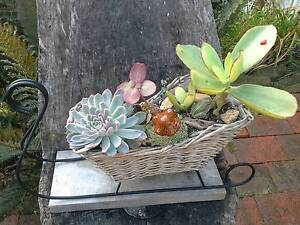 Sleigh full of beautiful succulents Rosevears West Tamar Preview