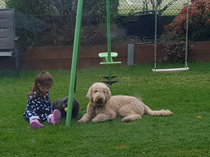 Looking for a new home for our labradoodle