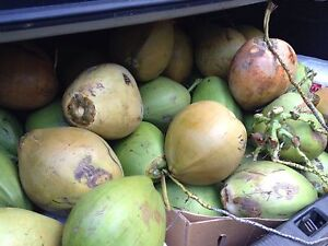 Whole healthy local coconuts for sale Cairns Cairns City Preview