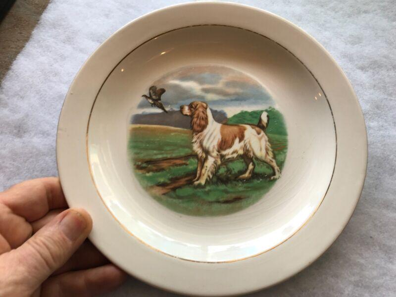 Springer Spaniel Vintage China Plate